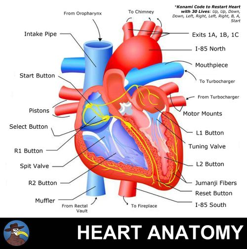 Coronary Artery Calcium Gomerpedia